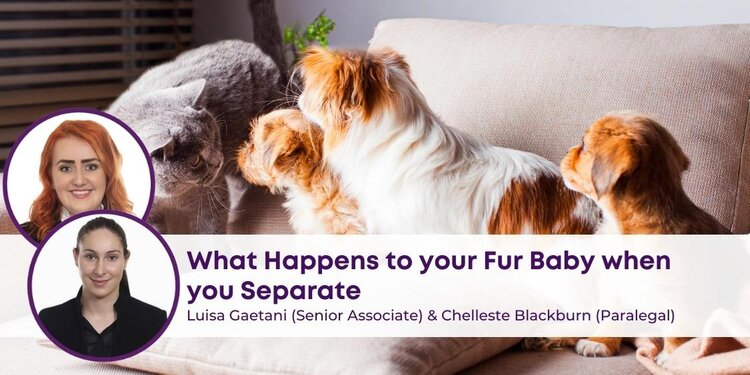 What Happens to Your Fur Baby When you Separate